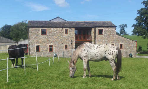 Horses on holiday at Newton Grange